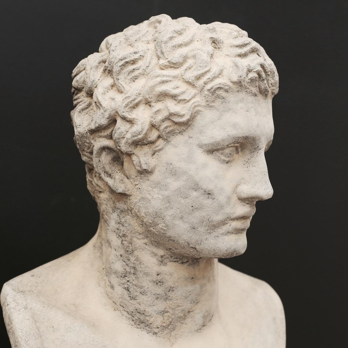 Bust of Adonis